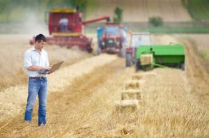Сбор зерна и сена