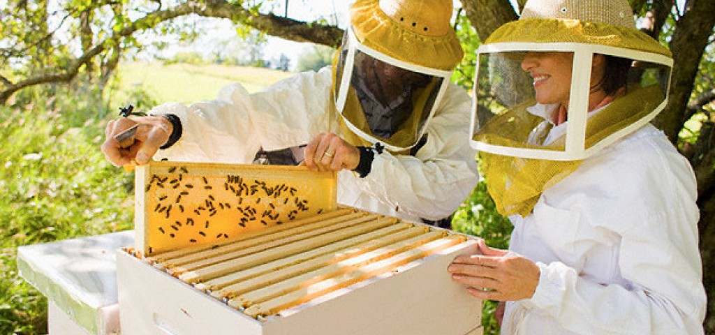 Новые технологии в пчеловодстве