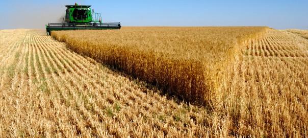 В самое ближайшее время начнется экспорт российской пшеницы в Китай