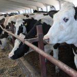 Производство продукции животноводства