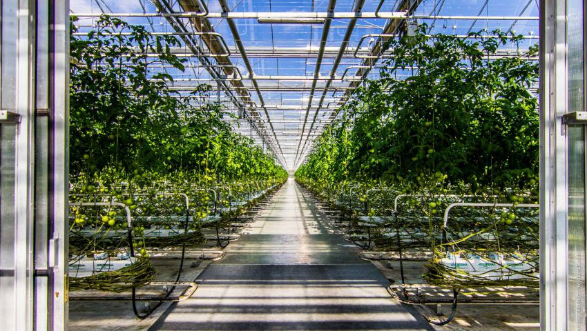 Тепличную отрасль овощеводства в Приморском крае будет спонсировать японская компания