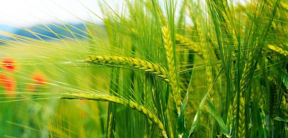 Организация производства в растениеводстви