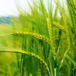 Организация производства продукции растениеводства