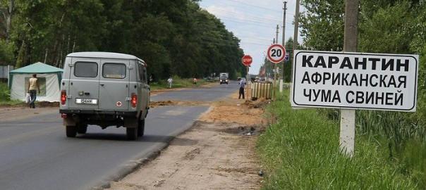Африканская чума свиней снова атакует Орловскую область