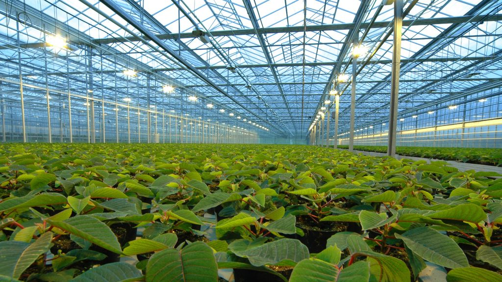 Тепличное хозяйство России увеличится к 2020 году на 1,5 тысячи гектаров