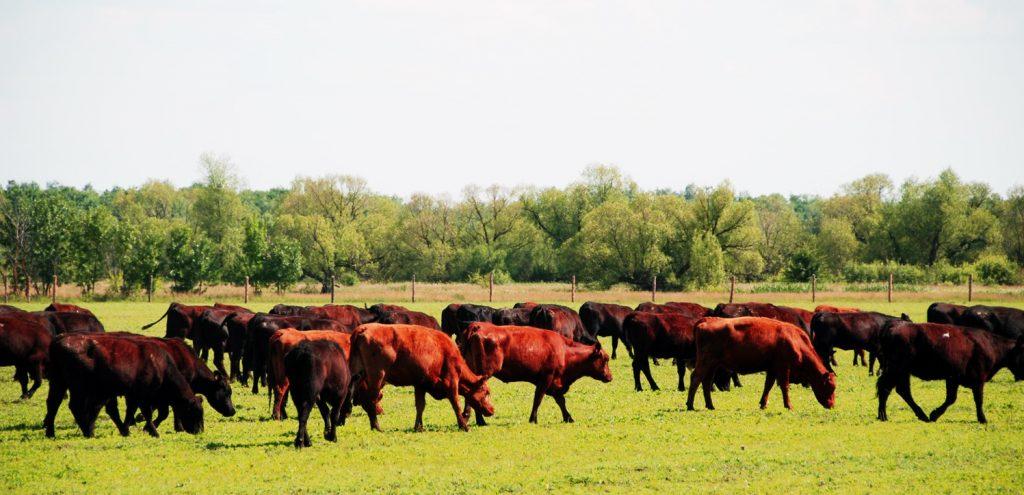 Системы животноводства
