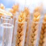 Генномодифицированные корма из Европы не будут поставляться в Россию