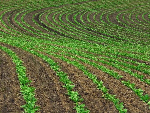 Реализация государственной программы в агропромышленном комплексе невозможна без точной карты сельскохозяйственных угодий