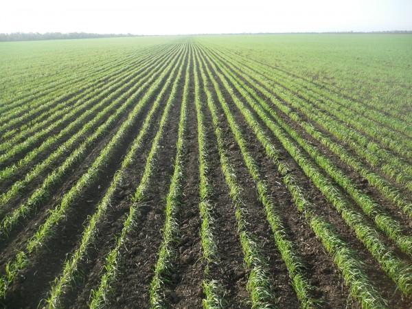 Успешно проведенный сев – залог хорошего урожая