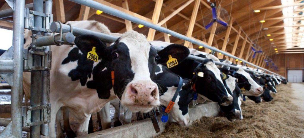 Организация животноводства
