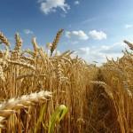 Особенности учета, переработки и реализации продукции растениеводства