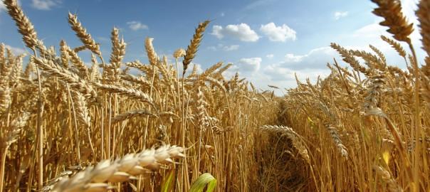 Производство продукции растениеводства