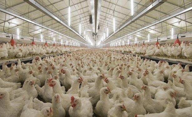 В Бурятии будет развиваться новый моногород на основе современной птицефабрики