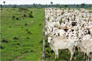 Мировое развитие животноводства