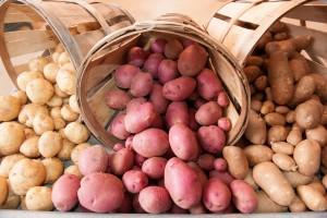 Картофель: оптовая продажа