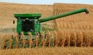 Обмолот кукурузы