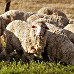 Виды животноводства