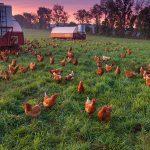Фермерское хозяйство по птицеводству