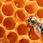 Кормление пчел зимой: правила и особенности