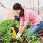 Профессии растениеводства