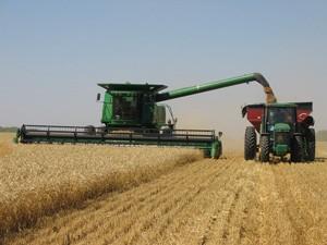 Работа комбайна во время сбора урожая пшеницы