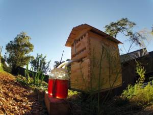 Извлечение мёда без вскрытия улья