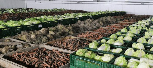 Хранение овощей в камере