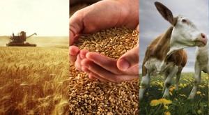 Составляющие сельского хозяйства