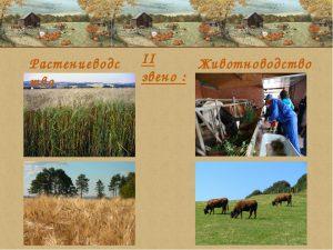 Связь растениеводства и животноводства