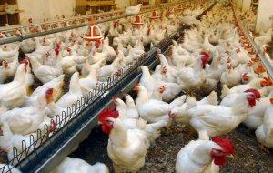 Инкубаторы для птицеводства