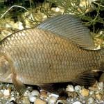 Рыбоводство в домашних условиях: азы и особенности