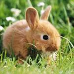 Кролики в сельском хозяйстве