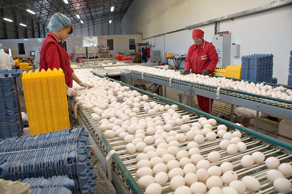Завод куриных яиц