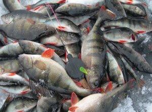 Любительское рыболовство в пруду