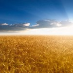 Производство продукции растениеводства в России