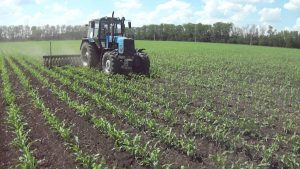 Обработка кукурузы мотыгой