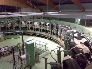 Современная ферма по разведению коров