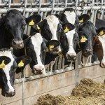 Молочное животноводство в России: современное состояние и перспективы развития