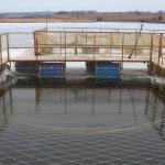 Товарное рыбоводство