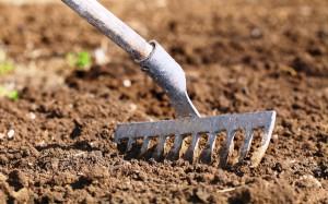 Подготовка площади для посадки моркови