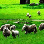 Какие потребности удовлетворяются благодаря животноводству