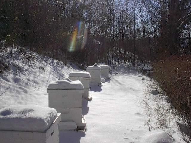 Пасека под снегом