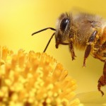 Новости пчеловодства