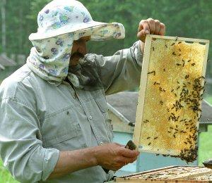 Пчеловод у пасеки