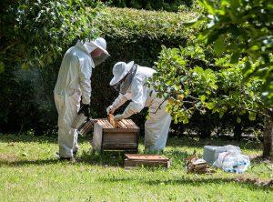 Пчеловоды работают на пасеке