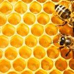 Пчеловодство для начинающих: особенности ухода и разведения пчел