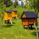 Промышленное пчеловодство: особенности отрасли и перспективы развития