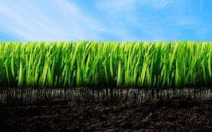 Плодородные почвы богатые гумусом