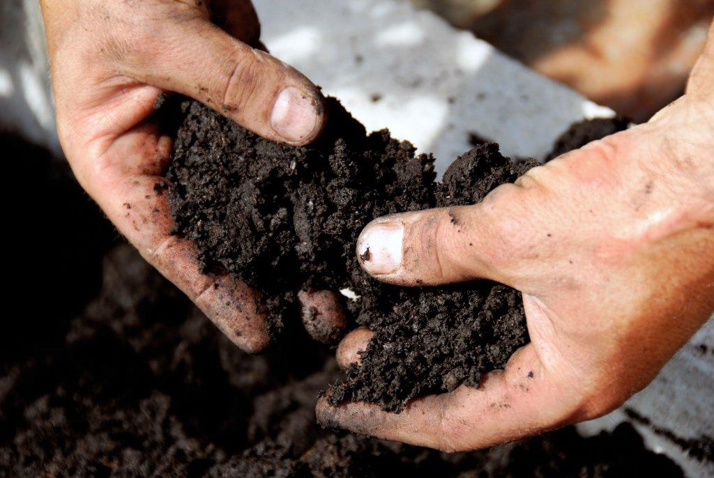 Подготовка почвы для посадки семян помидоров