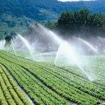 Подготовка почвы к посадке: виды и особенности